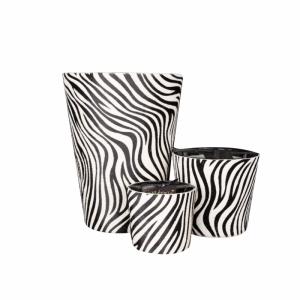 100 branduren zebra
